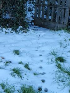 jardin neigeux